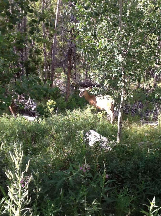 deer-up-close-2